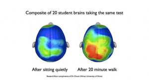 Comparison of twenty student brain activity scans after sitting quitely and after twenty minute walk. The brain activity after 20 minute walk is significantly higher comparing to sitting. Research/scan compliments of Dr. Chuck Hillman, University of Illinois.